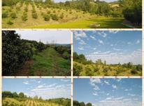 فروش زمین کشاورزی  باغ مرکبات زرین آباد علیا   در شیپور-عکس کوچک