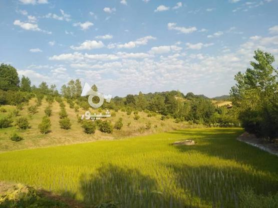 فروش زمین کشاورزی  باغ مرکبات زرین آباد علیا   در گروه خرید و فروش املاک در مازندران در شیپور-عکس6