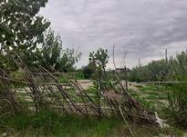 فروش زمین 1200 متر در سرخرود در شیپور-عکس کوچک