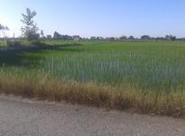 فروش زمین کشاورزی 11000 متر بر جاده جویبار - ساری در شیپور-عکس کوچک