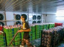 سبد حمل گوشت یخ زده ،سبد حمل مرغ یخ زده بادوام تحمل وزن بالا در شیپور-عکس کوچک