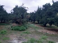 فروش زمین 2500 متر در آمل در شیپور-عکس کوچک
