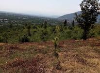 فروش زمین کاربری باغ 2546 متر در رامسر در شیپور-عکس کوچک