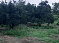 فروش زمین کشاورزی 2500 متر در آمل در شیپور-عکس کوچک