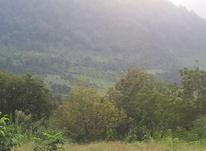 فروش زمین مسکونی 1000 متر در تنکابن در شیپور-عکس کوچک