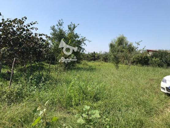 فروش فوق العاده زمین مسکونی641 متر در نشتارود در گروه خرید و فروش املاک در مازندران در شیپور-عکس2