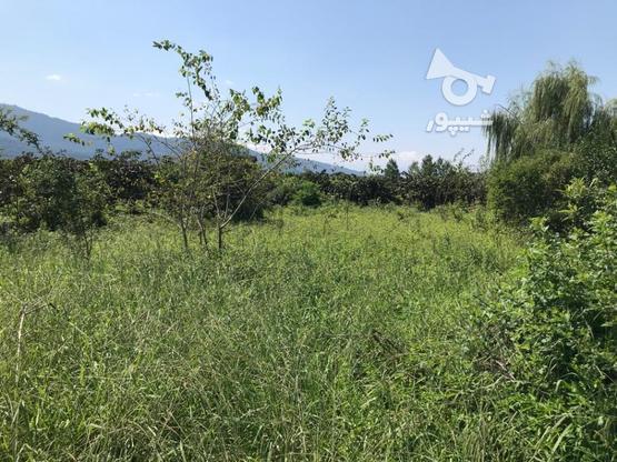فروش فوق العاده زمین مسکونی641 متر در نشتارود در گروه خرید و فروش املاک در مازندران در شیپور-عکس3