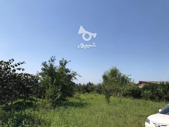 فروش فوق العاده زمین مسکونی641 متر در نشتارود در گروه خرید و فروش املاک در مازندران در شیپور-عکس4