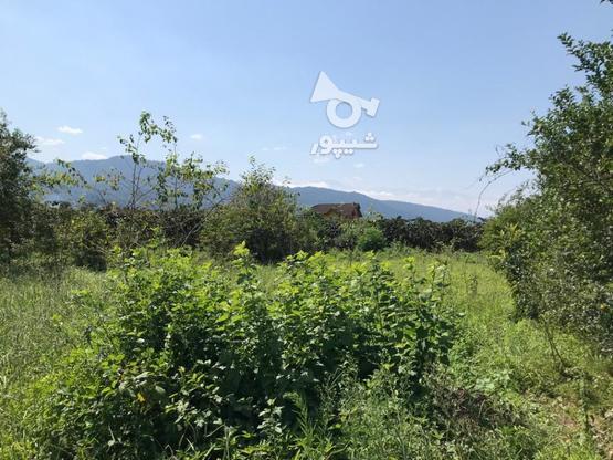 فروش فوق العاده زمین مسکونی641 متر در نشتارود در گروه خرید و فروش املاک در مازندران در شیپور-عکس1