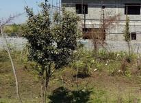 فروش زمین مسکونی 225 متر در فریدونکنار در شیپور-عکس کوچک