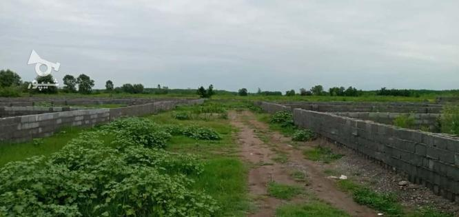 فروش زمین مسکونی 264 متر شهرکی در زیباکنار در گروه خرید و فروش املاک در گیلان در شیپور-عکس4