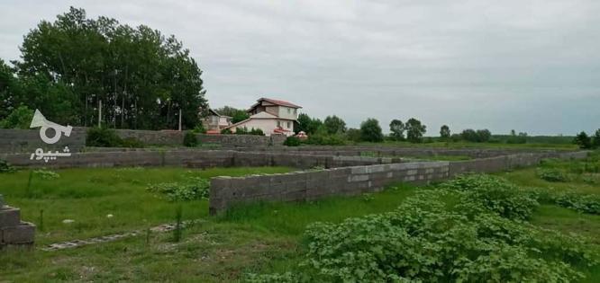 فروش زمین مسکونی 264 متر شهرکی در زیباکنار در گروه خرید و فروش املاک در گیلان در شیپور-عکس3