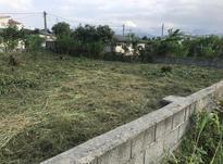 فروش زمین مسکونی 880 متر در نشتارود در شیپور-عکس کوچک