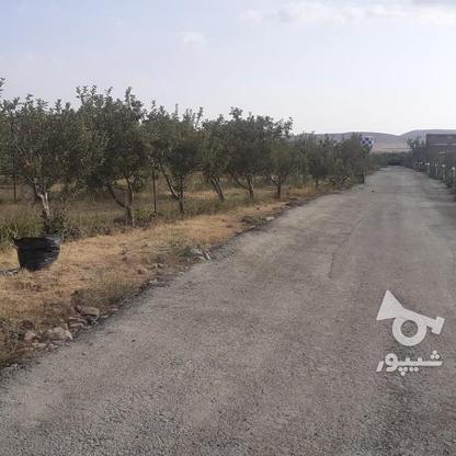 فروش زمین کشاورزی 200 متر در دماوند جابان  در گروه خرید و فروش املاک در تهران در شیپور-عکس6