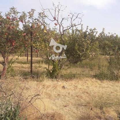 فروش زمین کشاورزی 200 متر در دماوند جابان  در گروه خرید و فروش املاک در تهران در شیپور-عکس4