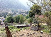 فروش زمین مسکونی 230 متر لاویج نور در شیپور-عکس کوچک