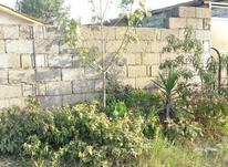 فروش زمین مسکونی 255 متر در چاف و چمخاله در شیپور-عکس کوچک