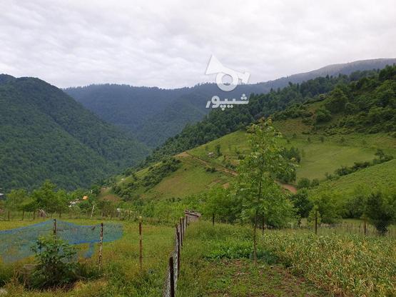 فروش زمین مسکونی 400 متری در رضوانشهر در گروه خرید و فروش املاک در گیلان در شیپور-عکس3