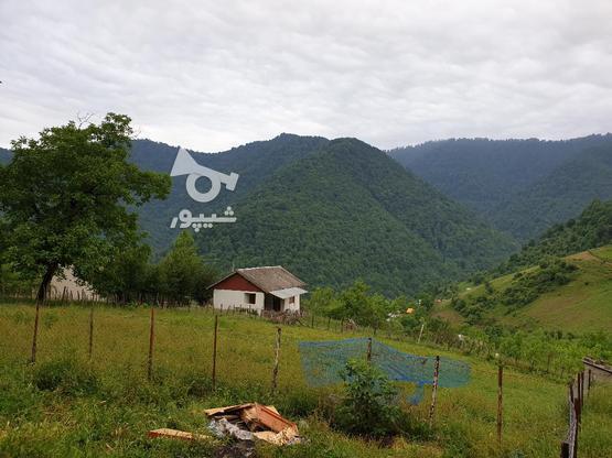 فروش زمین مسکونی 400 متری در رضوانشهر در گروه خرید و فروش املاک در گیلان در شیپور-عکس1