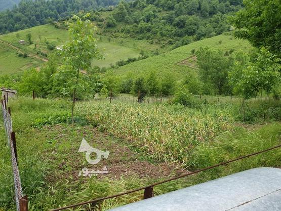 فروش زمین مسکونی 400 متری در رضوانشهر در گروه خرید و فروش املاک در گیلان در شیپور-عکس2
