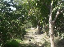 فروش زمین کشاورزی 486 متر در شهریار در شیپور-عکس کوچک