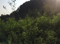 400 متر زمین باغی در آهندان لاهیجان در شیپور-عکس کوچک
