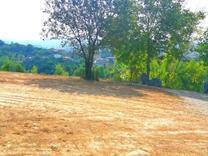 350متر زمین در تنگه لته پایین کولا در شیپور