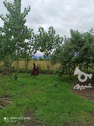 فروش ویلا 500 متری در صومعه سرا در گروه خرید و فروش املاک در گیلان در شیپور-عکس4