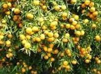 فروش معاوضه زمین کشاورزی5475متر در تنکابن در شیپور-عکس کوچک