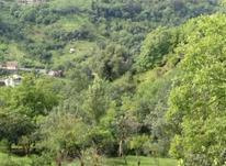 1002 متر زمین مسکونی سند دار در جاده سرولات  در شیپور-عکس کوچک