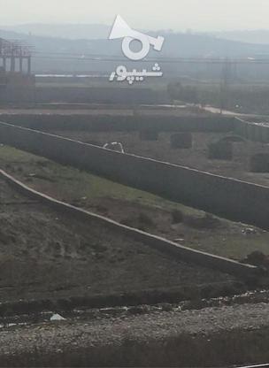 زمین براتوبان 150 متر شهرکی در گروه خرید و فروش املاک در مازندران در شیپور-عکس3