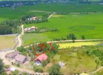 فروش زمین مسکونی 250 متر در لاهیجان در شیپور-عکس کوچک