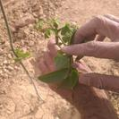 فروش باغ هفت چشمه بلداجی