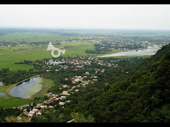 زمین مسکونی 10000 متر بر خط در لنگرود لیلاکوه ملات در گروه خرید و فروش املاک در گیلان در شیپور-عکس3