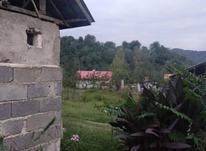 615 متر زمین مسکونی در توشی سیاهکل در شیپور-عکس کوچک