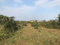 زمین مسکونی 2082 متر در نشتارود در شیپور