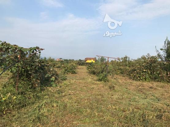 زمین  مسکونی 2082 متر در نشتارود در گروه خرید و فروش املاک در مازندران در شیپور-عکس1