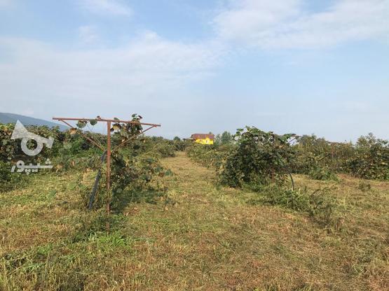 زمین  مسکونی 2082 متر در نشتارود در گروه خرید و فروش املاک در مازندران در شیپور-عکس2
