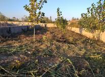 یک قطعه زمین 275 متر درروستای شهرستان در شیپور-عکس کوچک