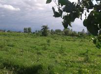 فروش زمین کشاورزی 2400 متر در لنگرود در شیپور-عکس کوچک
