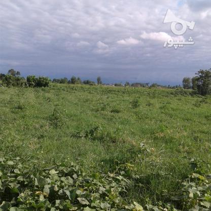 فروش زمین کشاورزی 2400 متر در لنگرود در گروه خرید و فروش املاک در گیلان در شیپور-عکس3