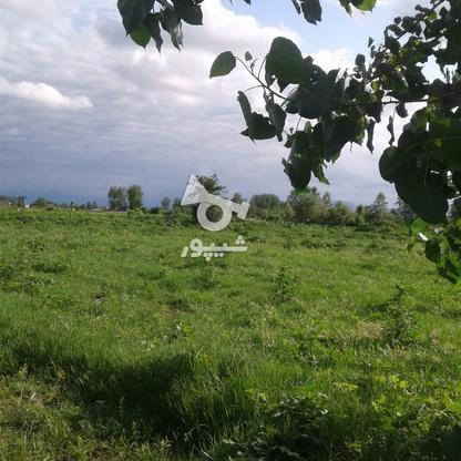 فروش زمین کشاورزی 2400 متر در لنگرود در گروه خرید و فروش املاک در گیلان در شیپور-عکس1