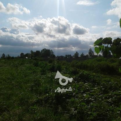 فروش زمین کشاورزی 2400 متر در لنگرود در گروه خرید و فروش املاک در گیلان در شیپور-عکس4