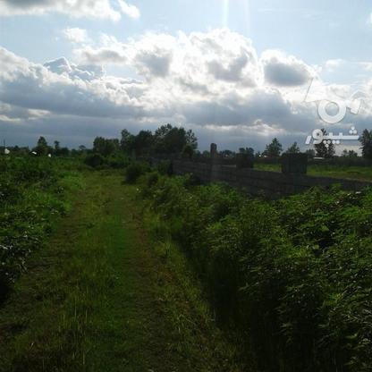 فروش زمین کشاورزی 2400 متر در لنگرود در گروه خرید و فروش املاک در گیلان در شیپور-عکس6
