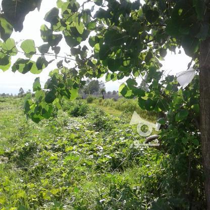 فروش زمین کشاورزی 2400 متر در لنگرود در گروه خرید و فروش املاک در گیلان در شیپور-عکس5