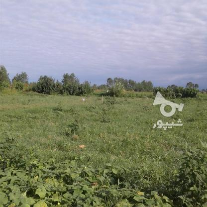 فروش زمین کشاورزی 2400 متر در لنگرود در گروه خرید و فروش املاک در گیلان در شیپور-عکس2