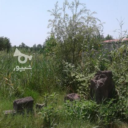 فروش زمین کشاورزی 2400 متر در لنگرود در گروه خرید و فروش املاک در گیلان در شیپور-عکس7