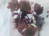 نهال انار دانه یاقوتی دو ساله گلدانی در شیپور-عکس کوچک