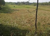 فروش زمین کشاورزی 3170 متر در لشت نشا در شیپور-عکس کوچک