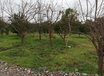 فروش زمین مسکونی 200 متر در منطقه برند در شیپور-عکس کوچک
